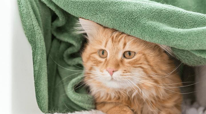 welttierschutztag:-fuer-das-wohlergehen-der-tiere